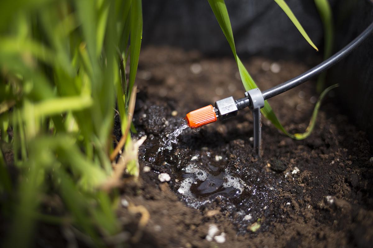 Arrosage Pour Plantes En Pot quelle quantité d'eau pour arroser mes plantes ?
